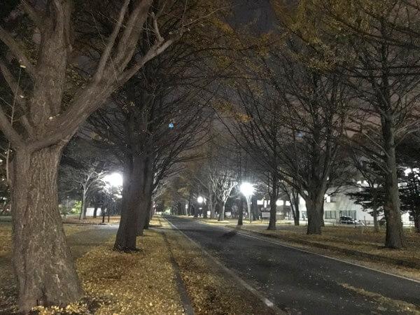 散ってしまった北海道大学のイチョウ並木